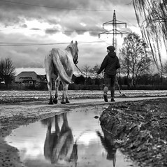 to be with horses (Leonegraph) Tags: horse frau women lady beauty panasonicgx80 panasonic1235mmf28 monochrome einfarbig bw sw blanco negro bn schwarz weis black white leonegraph streetphotographer public öffentlich leben lebendig story urban photography spontan spontanious candid unaware unposed personen sitaution street 2017 europe europa germany deutschland