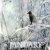 January 2018 - AMG Bookmark (virtually_supine) Tags: january2018artisticmanipulationgroupbookmark snow crow grasses branches creative wintry winter photomanipulation textures layers photoshopelements9 photoshopelements13mac collage