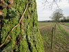 perspective with lichen (vintage vix - Everything is a miracle) Tags: lichen tree trunk perspective