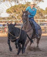 Rodeo (stenaake) Tags: cowboy cowgirl lady woman lasso calf riding horse rodeo entertainment show australia sa southaustralia downunder aussie carrieton orroroo