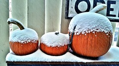 powdered sugar snow pumpkins ! (marianne kuzmen) Tags: noreaster pumpkin pumpkins snow snowy snowcapped snowtopped orange mariannekuzmen weather winter january windy cold text outdoors frozen fallingsnow newjersey winterstormgrayson white 2018 freezing samsung contrast color colorcontrast round three stems grayson fence frozenpumpkins samsunggalaxy