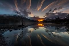 Lone Tree Llyn Padarn (E_W_Photo) Tags: llyn padarn llanberis wales snowdonia lake conwy sunrise mountain tree lone water mist canon 80d sigma 1020mm leefilters