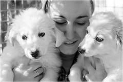 Oggi vi presento i cuccioli (andaradagio) Tags: andaradagio bianconero bw canon dog cane miglioramicodelluomo nadiadagaro rifugioohana bandaa4zampeumbria
