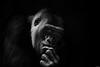 Thinking (Rico the noob) Tags: dof bokeh portrait monkey closeup d500 switzerland 70200mmf28 animal published 2017 zurich monochrome schweiz zoo nature indoor 70200mm animals eye blackandwhite bw