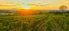 A Tuscan Daydream.... (Richard Cartawick) Tags: tuscany tuscanyitaly italy italynature italiancountryside nature panorama vista sunset sunsets sunlight solar europe outdoors naturelovers naturephotography countryside itaya italia montepulciano travel dusk thegreatoutdoors vineyards