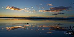 Calm Reservoir At Sunset (dcstep) Tags: dsc7088dxo sonya7riii sonyfe1224mmf4g cherrycreekstatepark cherrycreekreservoir lake reservoir sunset clouds water blue pink duck mallard mallardpair allrightsreserved copyright2017davidcstephens handheld tranquil calm
