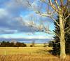 Tree (ella~d) Tags: tree empty winter colors sky blue landscape southdakota