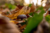 undercover (Herr Nergal) Tags: fz1000 lumix panasonic wald boden ground forest leaf blätter pilz mushroom warm bokeh blurry unscharf focus saarland nunkirchen braun brown close up makro