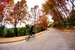 Cycling in red leaves forest (janetcmt's pictures) Tags: brompton samyang fisheye taitong yuenlong