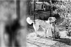 Oggi vi presento Paolina (andaradagio) Tags: andaradagio bianconero bw canon dog cane miglioramicodelluomo nadiadagaro rifugioohana bandaa4zampeumbria