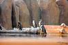 IMG_3205_copy (sinanaydin.net) Tags: eskişehir park hayvanat bahçesi zoo sazova animal
