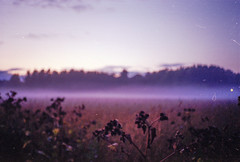 in gratitude for times passed (amanda aura) Tags: film helsinki finland yashicat3 nature mist landscape