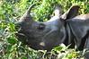 primo piano di rinoceronte (albertotenconi) Tags: mammifero rinoceronte nepal