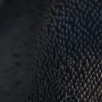 Penguin Feathers thumbnail
