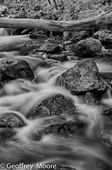 Mountain Stream Black and White (GeoffMooreMedia) Tags: flow log moss natural overallrun mathewsarm woods swift slippery slow appalachian creek contrast virginia rushing outdoors lichen blurred greyscale current wild smooth blackandwhite tuscarora falls nature nationalpark stream meltwater crossing spring longexposure wooded rocks forrest bw shenandoah mountains rapids waterfall river motion torrent monochrome brook water slowshutterspeed mossy wilderness cool