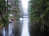 stream of light (michaelmueller410) Tags: flus bach wasser licht harz talsperre soese söse sösetalsperre winter stream brook trees bäume wald damm dam