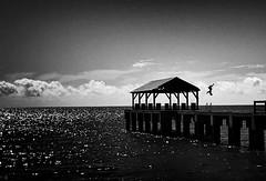 the jumper (4tun8bug) Tags: sea ocean kauai waimea hawaii pier jetty person jump dive outdoor monochrome iphone bridge roof blackandwhite vignette sky water beach
