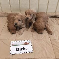 Sophia Girls 1-6