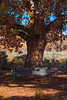 partly shaded november bench (johngpt) Tags: autumn fujinonxf55200mmf3548rlmois tree riograndenaturecenter fujifilmxt1 cottonwood trees places bench sliderssunday hss