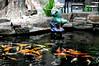 The koi king (Roving I) Tags: statues fishermen koi carp fish ponds decor truclamvien bamboogarden cafes restaurants dining venues gardens tourism danang vietnam