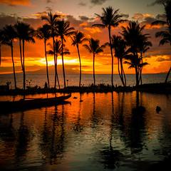 To Live is To Fly (Thomas Hawk) Tags: grandwailea hawaii maui wailea waldorfastoria waldorfastoriagrandwailea beach clouds humuhumu humuhumunukunukuapuaa palmtree restaurant sunset tree fav10 fav25 fav50 fav100
