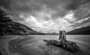 Lake lookout (Rob-Shanghai) Tags: lake nz mono newzealand tekapo bird tree leica m240 cv21mm