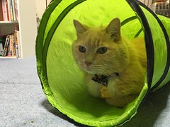 Norio in the Tunnel (sjrankin) Tags: japan hokkaido yubari cattunnel tunnel bedroom floor norio cat animal edited 19december2017