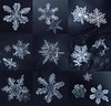 Christmas day collection (marianna_a.) Tags: christmas snow snowflake macro ice crystal unique individuals mariannaarmata winter extensiontubes