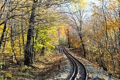 Autumn in Buda hills (deakb) Tags: nikon d500 sigma 1750 f28 hungary autumn nature hills yellow green budapest normafa buda childrens railway