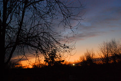 Saturday Sunrise. (dccradio) Tags: lumberton nc northcarolina robesoncounty outdoors outside nature tree trees branches treebranches treelimbs morning sunrise goodmorning silhouette sky colorfulsky cloud clouds horizon dawn daybreak morninglight natural scenic beauty beautiful pretty nikon d40 dslr