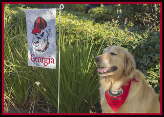 Dawgs are awesome!