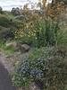 australian national botanic garden-22 (billdoyle[mobile]) Tags: australiannationalbotanicgarden act garden botanicgarden australia australiancapitalterritory anbg canberra australian billdoyle canberratripdec17jan18