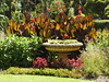 Backlit cannas (Lesley A Butler) Tags: victoria summer royalbotanicgardens melbourne garden australia