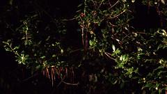 _MG_2894.CR2 (jalexartis) Tags: nightphotography night nightshots rain