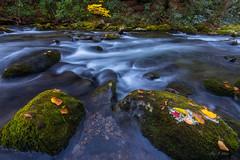 Autumn Boulders (Ping...) Tags: gsmnp greatsmokeymountains smokies fall autumn creek flow boulder moss leaves stream cascade greatsmokeymountainsnationalpark nationalpark