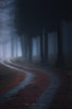 Saldropo's Way (Mimadeo) Tags: forest dark fog trees tree foggy path misty mist trunk trunks landscape light mystery mysterious ethereal darkness gloomy pathway footpath road countryroad lane saldropo gorbea shadow rainy mood atmosphere atmospheric moody