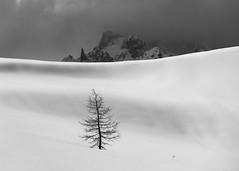 Lonely tree 2 (andreasbrink) Tags: italy landscape mountains winter alpedevero snow blackwhite minimalism