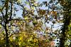 _DSC6195 (xav_roberts) Tags: nikon nikonv1 nikkor dof moss lichen nature funghi rust autumn wintersun moisture dew morningdew outdoor countryside rural plants nikkon1 nikkor32mm nikonft1 sigma105mmf28 sigma105mm sigma