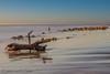 ALBADA AL DELTA DE L´EBRE (juan carlos luna monfort) Tags: amanecer deltadelebro tronco mar olas rocas nikond7200 sigma1750 calma paz tranquilidad mediterraneo