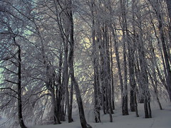 téli erdő / winter forest (debreczeniemoke) Tags: tél winter hó snow tájkép landscape túra hiking erdő forest hegy mountains gutinhegység munţiigutin munţiigutâi erdély transilvania transylvania olympusem5