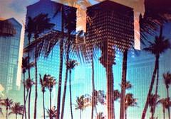 (mikehip) Tags: chicago puerto rico summer palm filmswap fim color holga 35mm lomo double exposure blue city skyline kodak film