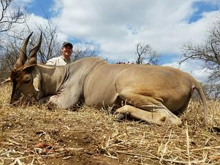 Zimbabwe Cape Buffalo Hunt 67