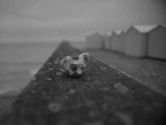 faded memories of summer (l'imagerie poétique) Tags: minoltax700 normandie poeticimagery limageriepoétique film believeinfilm