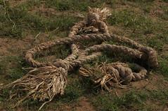 A Frayed Knot (tim ellis) Tags: chambalriver chambalsafari holiday rope knot frayed uttarpradesh india