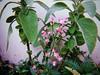here to stay (meeeeeeeeeel) Tags: huji hujicam hujiapp roses rosebuds rosas botõesderosa rosinhas garden jardim