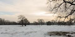 De Bunt (doevos) Tags: bos gelderland hogeveluwe npdhv nederland sneeuw veluwe winter forest neige snow woud