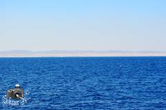 Elphinstone Reef (ShaunMYeo) Tags: egypt egipte egjipt مصر եգիպտոս misir egipto егіпет মিশর egipat египет 埃及 egypten egypte egiptujo egiptus ehipto egypti exipto ეგვიპტეში ägypten αίγυπτοσ ઇજીપ્ટ misira מצרים मिस्र egyiptom egyptaland mesir egittoエジプト ಈಜಿಪ್ಟ್ мысыр ប្រទេសអេហ្ស៊ីប 이집트 ອີຢິບ ēģipte egiptas ejipta ഈജിപ്ത് eġittu ihipa इजिप्त मिश्र egipt egito ਮਿਸਰ египат egepeta ඊජිප්තුවේ masar misri миср எகிப்து ఈజిప్ట్ อียิปต์ mısır єгипет misr egipti redsea