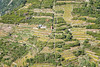 Terraced vineyards in the Cinque Terre National Park above Manarola - Liguria - Italy (PascalBo) Tags: nikon d500 europe italia italie italy liguria ligurie laspezia cinqueterre nationalpark parcnational outdoor outdoors landscape paysage agriculture pascalboegli