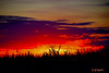 DSC_9512 ~ Sunset over Sugarcane in Clewiston (stephanie.ovdiyenko) Tags: sunset colors sky sun silouettes landscapes