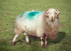 tup - definition and meaning